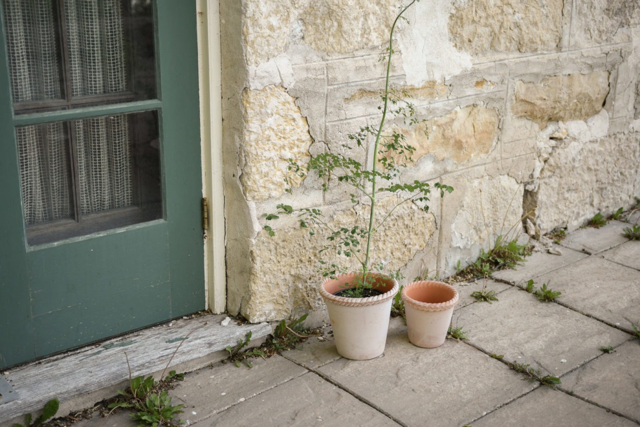 Collection Feature: from earth to windowsill with Bergs Potter